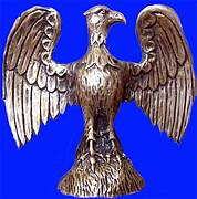 złoty sokół
