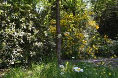 Galeria Arboretum w Lipnie - 2016