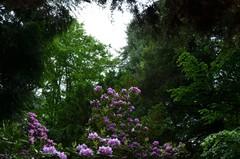 Galeria Arboretum Lipno 2018